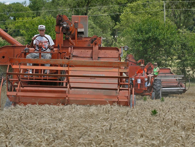 Marion Klutzke sits behind the wheel of an Allis-Chalmers SP 100, a self-propelled combine, as he brings in the wheat harvest during the 12th annual Little K Wheat Harvest Friday, July 4, 2014, at his farm off County Road 550 West, West Lafayette. Using vintage Allis-Chalmers tractors and implements, friends and family help Klutzke, 83, harvest 30 acres of wheat from July 4 through July 6.