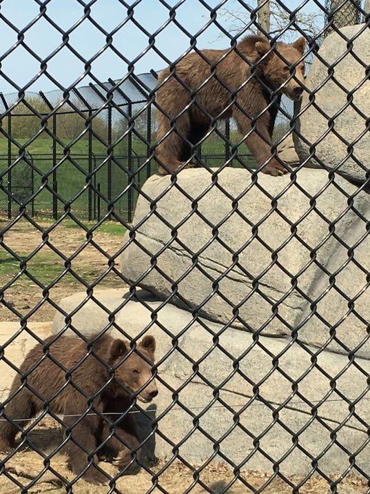 636093740338436910-bears.jpg