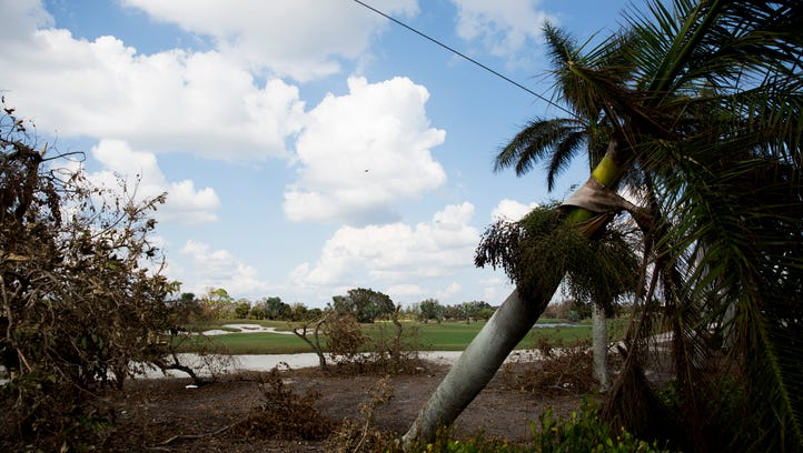 Fallen trees and other debris can be seen scattered