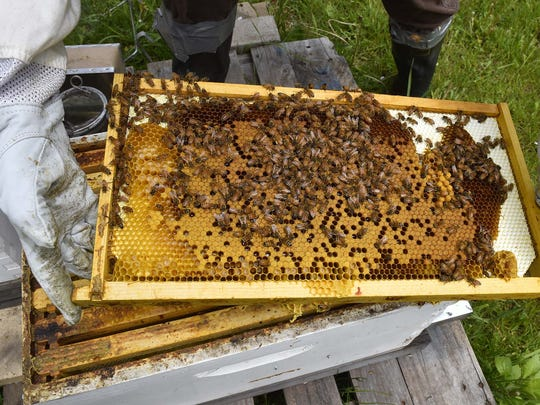 A partially capped honeycombed bee frame. Tina M. Gohr/USA TODAY NETWORK-Wisconsin