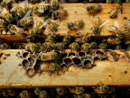 -HONEYBEES2 0502 CROP.jpg_20070502.jpg