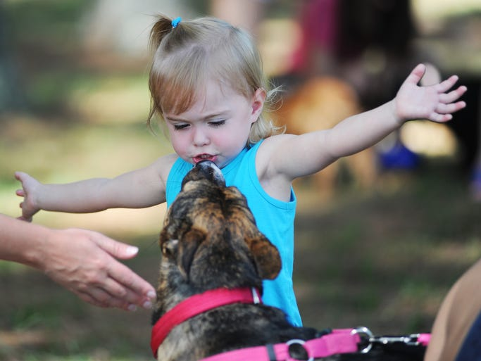 Julia Owens, 2, of Madison, greets Remi, a three year-old Blue Healer-Basenji mix, during Community Animal Rescue and Adoption's annual Dog Days of Summer event at Pelahatchie Shore Park in Rankin County.