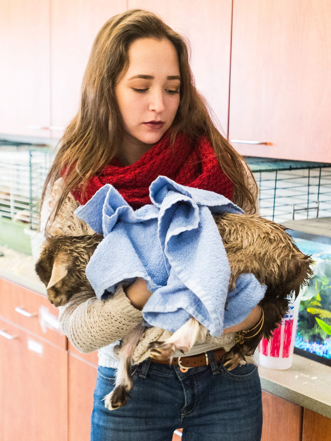 Cape Henlopen senior Madison Moore dries a goat after a bath at Cape Henlopen High School on Tuesday, March 22.