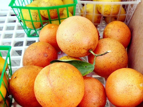 Check listings for farmers markets in Southwest Florida