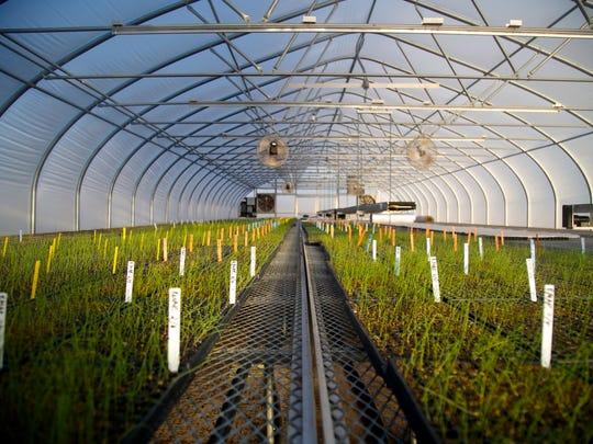 A greenhouse at Profeta Farms in Readington.