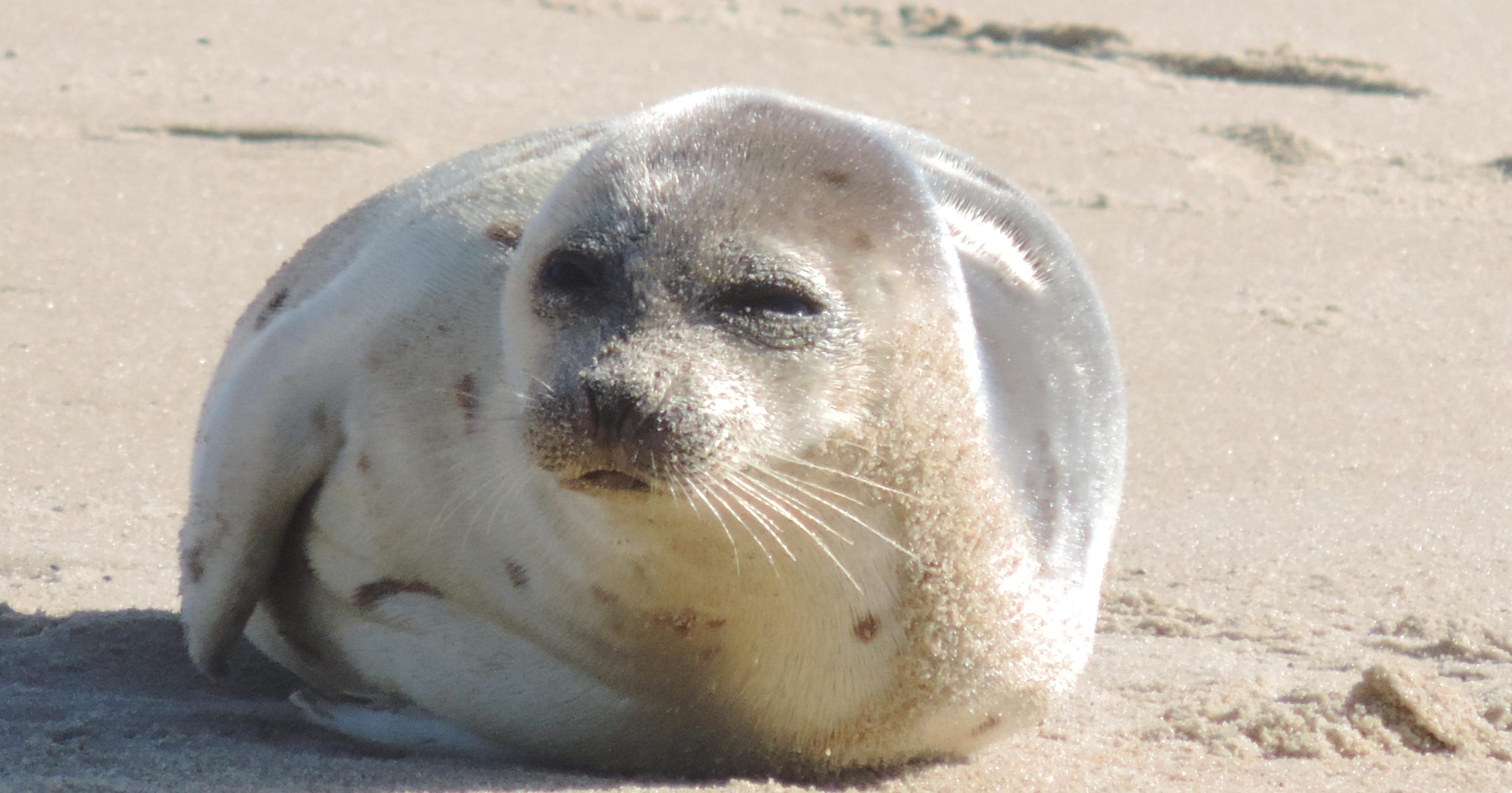 Seals may look cuddly, but never pet or feed them