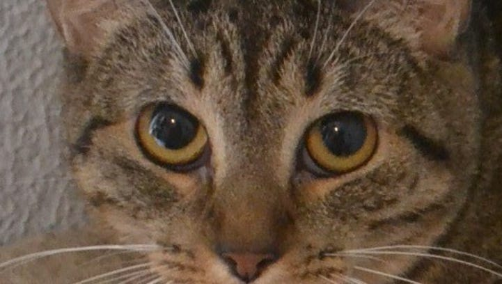 Trinity, spayed, indoors, can be shy, seeks someone