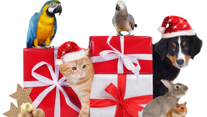 Different pets with christmas parcels