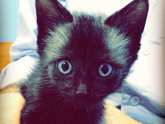 Nox the kitten