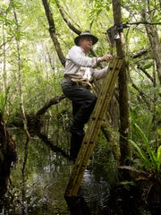 Volunteer Jay Staton of Naples changes out a digital card in a motion detector camera in the Fakahatchee Strand last year.