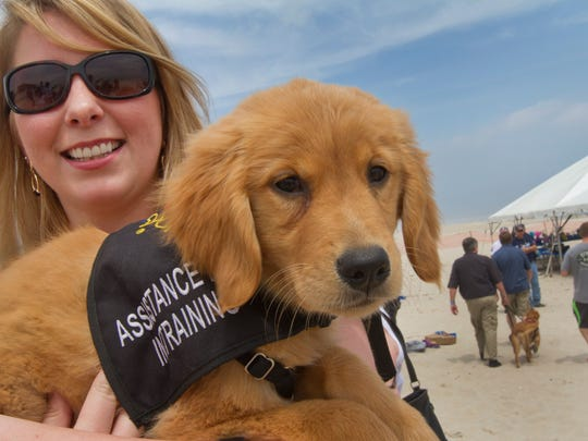 """Ashley Sweerus of Aston Pa. had the pleasant duty of babysitting """"Shilo"""" a service dog puppy that is still too young but soon will be in training to become a veteran's service dog. Benefit Beach Party for Paw4Vets at Chef Mike's Atlantic Bar & Grill in Seaside Park. They hope to raise $100,000 for the organization that matches returning servicemen with service dogs to help them in their daily lives. NJ on May 17, 2015. Peter Ackerman/Staff Photographer"""