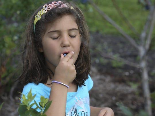 Juliana Cardoso can't resist eating as she picks berries