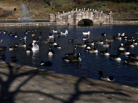 Lake Duck Problem_Syed.jpg