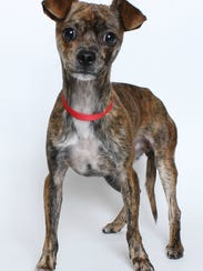 Zeus, one of the dogs adopted during the Home for the