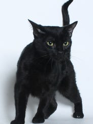 Raeven, one of the cats adopted during the Home for
