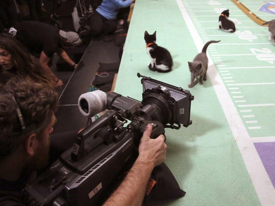 Kittens prepare for a taping of Kitten Bowl III in New York. The Hallmark Channel taped Kitten Bowl III months ahead of Super Bowl Sunday, taking place on Feb. 7.