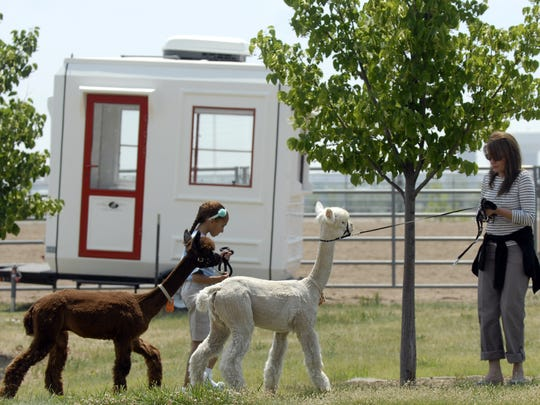 Jan Albin and her daughter Isabella, 10 walk their alpacas Remmy and Hurley Wurley at The Ranch evacuation center.  They had to leave their home at 3 a.m. as a wall of fire approached them.  Several neighbors helped them move 150 animals safely from the Day Break Ranch.  More than 40,000 acres and over100 structures and  have been lost to the Hide Park Fire in areas surrounding Rist Canyon, Stove Prairie, Paradise Park and Poudre Canyon.  More that 500 firefighters are battling the large fire that filled the skies around Ft. Collins with smoke and ash on Tuesday, June 12, 2012. Lightning sparked the fire, which started June 9, 2012, and was 100 percent contained by June 30, 2012. It killed one woman, burned 87,284 acres and destroyed 259 homes, making it the third-most destructive and third-largest wildfire in Colorado history.