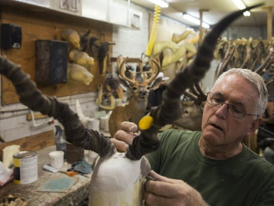 Owner Bucky Flowers works on an antelope trophy in the workshop of Skin and Scales Taxidermy on June 28, 2016 in Naples, Florida.(Nicole Raucheisen/Staff)