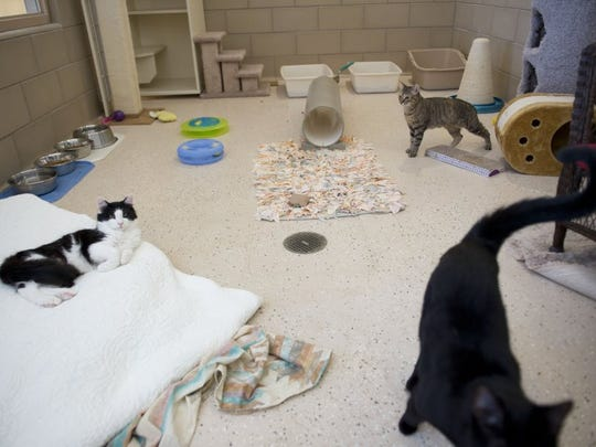 Images from the Humane Society of St. Lucie County in Port St. Lucie on Friday, July 8, 2016. There are a total of 369 cats and 280 dogs in the county up for adoption. July 23 is national Empty the Shelter Day and both Humane Society locations in Port St. Lucie and Fort Pierce will be offering a name your own price promotion for all animals, which includes a spay/neuter and a microchip. For more information, visit www.hsslc.org.