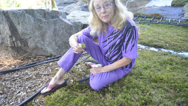 """Mossin' Annie"" Martin sits on a carpet of her favorite plant cultivated at her Mountain Moss nursery in Brevard. The Asheville native is the author of the new book ""The Magical World of Moss Gardening."""