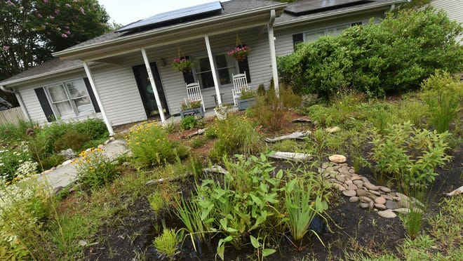 Carson and Amber Woods' rain and stormwater garden at their home in Castle Hayne, N.C.
