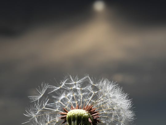 The sun peers out of the overcast cloud on the seed