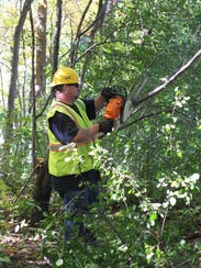 The Department of Public Works worked to remove buckthorn