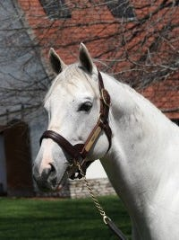 Leading sire Tapit.