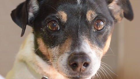 Pet of the Week: Rocky