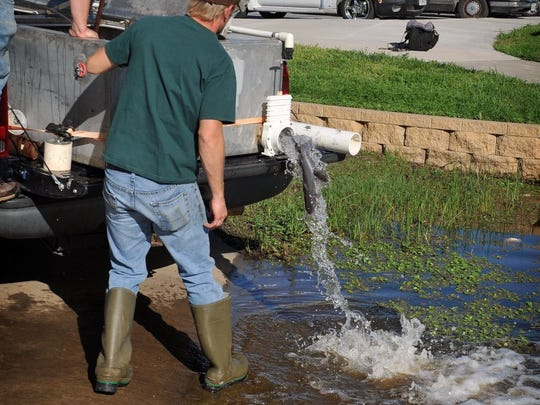 Channel catfish from the Dundee State Fish Hatchery were released in April 2016 into the South Weeks Park pond. On Nov. 22, the pond will be stocked with rainbow trout, and restocked frequently though the winter.