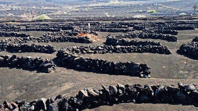 The volcanic vineyards of Lanzarote.