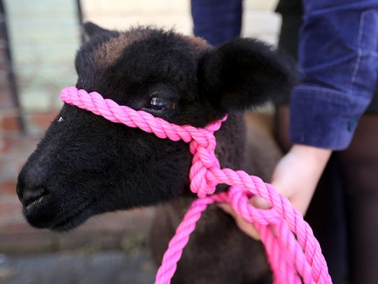 Sassy, a lamb, and other animals will be available