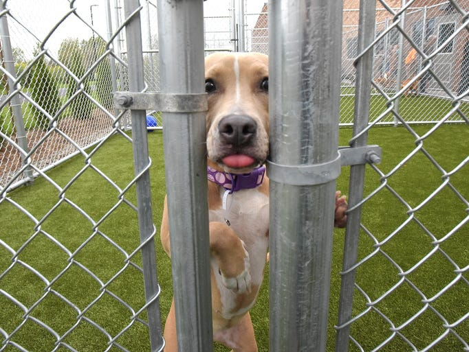 The new Oakland County Animal Shelter and Pet Adoption