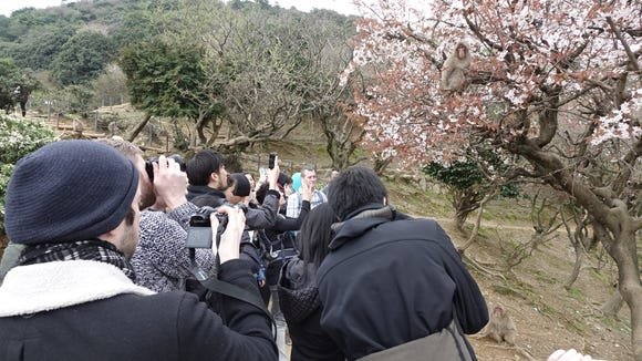 Tourists mob a local monkey for a photo op near Kyoto,