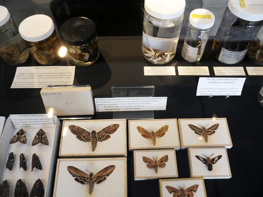 File photo of an exhibit for Waynesboro's Center for Coldwaters Restoration. The center backed efforts to bring the planned satellite center for the Virginia Museum of Natural History.