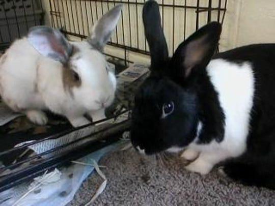 Pedro and Valentine