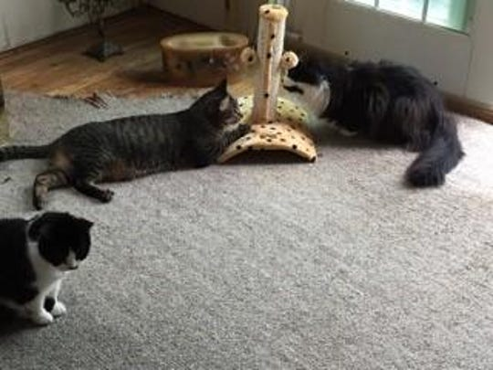 A Birmingham resident said a pair of outdoor cats are bothering her three indoor cats, BillyBob, Lilliana Leticia, and Monsieur Pepper.