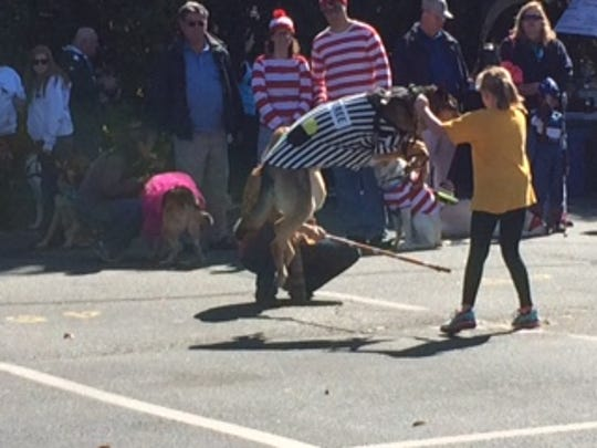 """Tanushi, winner of the """"Tricks"""" competition, demonstrates a pole jump on Sunday at The Seeing Eye Doggy Dash in Morristown."""