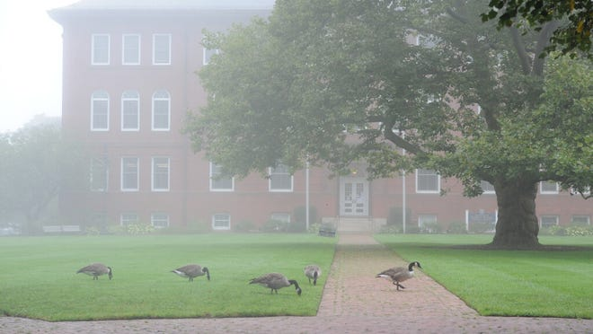 HYANNIS -- 09/10/20 -- A thick fog covers the Village Green as a geese graze in front of Barnstable Town Hall Thursday afternoon.