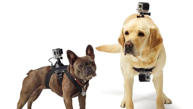 GoPro's Fetch camera harness.
