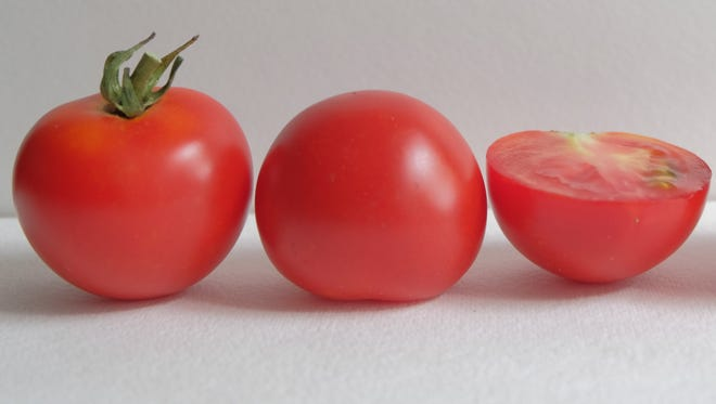 Red Racer cocktail tomato plants bear fruit a week to 10 days earlier than other similar tomatoes.