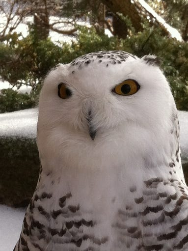 Nashville Zoo bird keeper Rebecca Bell,snapped this
