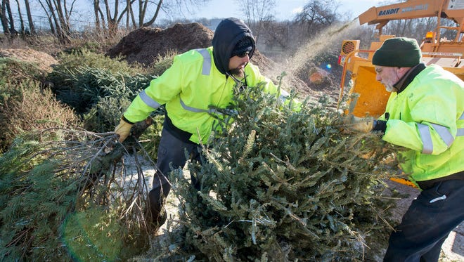 Chris Maldonado, left, and Chip Rodgers push Christmas tree into the chipper in York Monday January 4, 2015