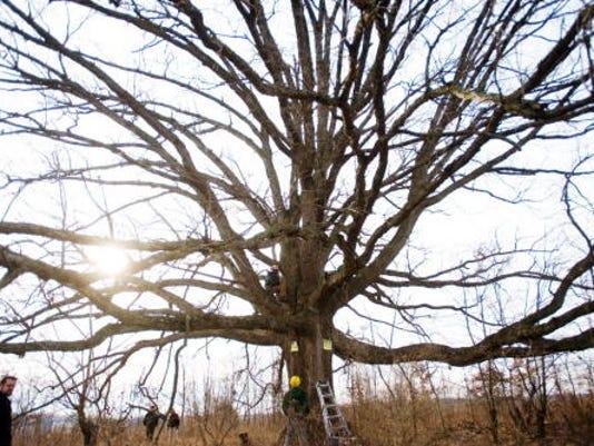 tree2_500