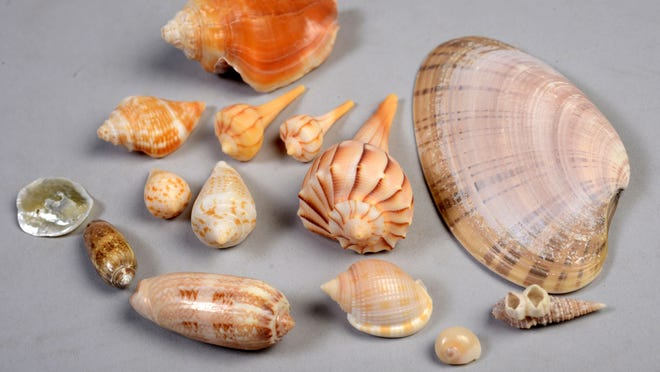 Shell Yeah An Obsessive Hobby