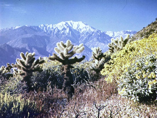 The Devils' Garden with a forest of cholla.