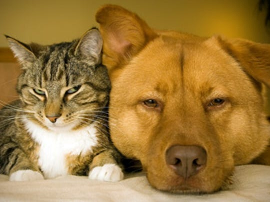 Plenty of adoptable pets are available at the shelter