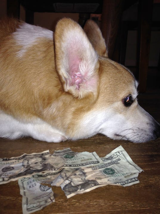 DFP Tompor dog cash.JPG