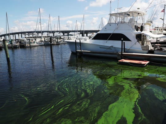 Algae builds up at the Fort Myers Yacht Basin on Thursday. Recent algae blooms are starting to move west down the Caloosahatchee River. U.S. Sen. Bill Nelson met with water advocates and elected officials to discuss the water quality.