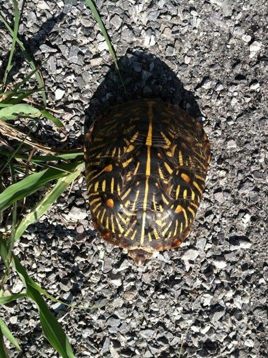 636390888889942129-turtle.jpg